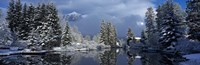 """Reflection of tree in a creek, Spring Creek, Mt Rundle, Canmore, Alberta, Canada by Panoramic Images - 36"""" x 12"""""""