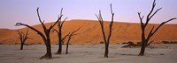 """Dead trees in a desert at sunrise, Dead Vlei, Sossusvlei, Namib-Naukluft National Park, Namibia by Panoramic Images - 36"""" x 12"""""""