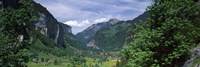 Forest, Lauterbrunnen Valley, Bernese Oberland, Berne Canton, Switzerland by Panoramic Images - various sizes