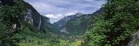 Forest, Lauterbrunnen Valley, Bernese Oberland, Berne Canton, Switzerland Fine Art Print