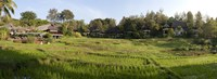 """Rice fieldst, Chiang Mai, Thailand by Panoramic Images - 36"""" x 12"""""""