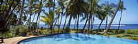 Palm Trees in Maui, Hawaii (horizontal) Fine Art Print