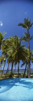 Palm Trees in Maui, Hawaii (vertical) Fine Art Print