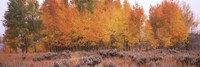 "Jackson Hole in Autumn by Panoramic Images - 36"" x 12"""