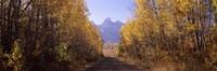 "Road passing through a forest, Grand Teton National Park, Teton County, Wyoming, USA by Panoramic Images - 36"" x 12"""