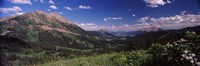 "Wildflowers with mountains in the background, Crested Butte, Gunnison County, Colorado, USA by Panoramic Images - 36"" x 12"""