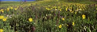 Wildflowers in a field, Crested Butte, Colorado by Panoramic Images - various sizes