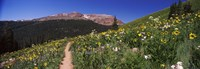 "Wildflowers in a field with Mountains, Crested Butte, Colorado by Panoramic Images - 36"" x 12"""