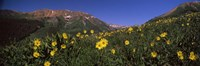 "Wildflowers in a forest, Kebler Pass, Crested Butte, Gunnison County, Colorado, USA by Panoramic Images - 36"" x 12"""