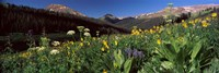 "Wildflowers in a forest, West Maroon Pass, Crested Butte, Gunnison County, Colorado, USA by Panoramic Images - 36"" x 12"""