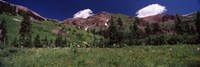 Forest, Crested Butte, Gunnison County, Colorado, USA by Panoramic Images - various sizes