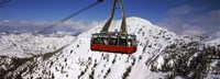 Overhead cable car in a ski resort, Snowbird Ski Resort, Utah Fine Art Print