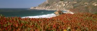"""Flowers on the coast, Big Sur, California, USA by Panoramic Images - 36"""" x 12"""", FulcrumGallery.com brand"""