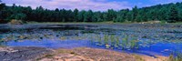 "Pond in a national park, Bubble Pond, Acadia National Park, Mount Desert Island, Hancock County, Maine, USA by Panoramic Images - 36"" x 12"""