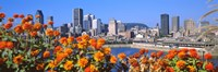 "Blooming flowers with city skyline in the background, Montreal, Quebec, Canada 2010 by Panoramic Images, 2010 - 36"" x 12"""
