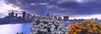 "Blooming flowers with Montreal skyline, Quebec, Canada 2010 by Panoramic Images, 2010 - 36"" x 12"""