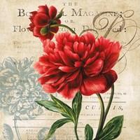 "The Botanist Magazine by Carol Robinson - 12"" x 12"", FulcrumGallery.com brand"