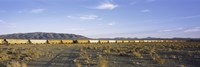 "Freight train in a desert, Trona, San Bernardino County, California, USA by Panoramic Images - 36"" x 12"""