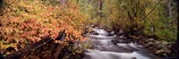 """Stream flowing through a forest by Panoramic Images - 36"""" x 12"""""""