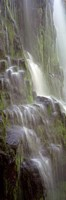 Waterfall in a forest, Proxy Falls, Three Sisters Wilderness Area, Willamette National Forest, Oregon (black and white) by Panoramic Images - various sizes
