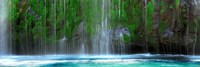 Waterfall in a forest, Mossbrae Falls, Sacramento River, Dunsmuir, Siskiyou County, California, USA by Panoramic Images - various sizes