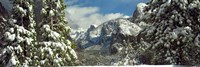 Snowy trees in winter, Yosemite Valley, Yosemite National Park, California, USA by Panoramic Images - various sizes