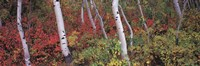 "Trees in a forest by Panoramic Images - 36"" x 12"" - $34.99"