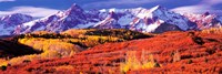 Forest in autumn with snow covered mountains in the background, Telluride, San Miguel County, Colorado, USA Fine Art Print