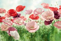 Poppies Pleasure Fine Art Print