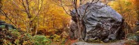 """Big boulder in a forest, Stowe, Lamoille County, Vermont, USA by Panoramic Images - 36"""" x 12"""", FulcrumGallery.com brand"""