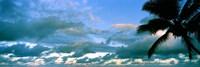 "Palm tree on the beach, Hawaii, USA by Panoramic Images - 36"" x 12"""