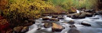 """Stream flowing through a forest, Inyo County, California, USA by Panoramic Images - 36"""" x 12"""""""