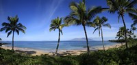 "Palm trees on the beach, Maui, Hawaii, USA by Panoramic Images - 36"" x 16"""