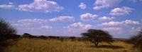 "Landscape view of arid savannah in the dry season, Central Kalahari Game Reserve, Botswana by Panoramic Images - 36"" x 12"""