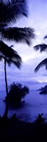 Palm trees on the coast, Colombia (purple and blue) Fine Art Print