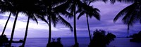 Palm trees on the coast, Colombia (purple horizontal) Fine Art Print