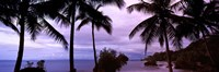 Palm trees on the coast, Colombia (purple sky with clouds) Fine Art Print