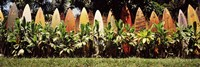Surfboard fence in a garden, Maui, Hawaii, USA Fine Art Print