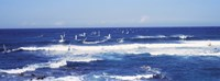 "Tourists windsurfing, Hookipa Beach Park, Maui, Hawaii by Panoramic Images - 36"" x 12"""