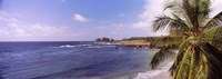 "Palm tree on the beach, Hamoa Beach, Hana, Maui, Hawaii, USA by Panoramic Images - 36"" x 12"""