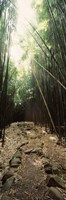 "Stone path through a Bamboo forest, Oheo Gulch, Seven Sacred Pools, Hana, Maui, Hawaii, USA by Panoramic Images - 12"" x 36"""