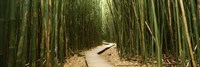 Wooden path surrounded by bamboo, Oheo Gulch, Seven Sacred Pools, Hana, Maui, Hawaii, USA Fine Art Print
