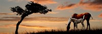 "Horse mare and a foal grazing by tree at sunset by Panoramic Images - 36"" x 12"""