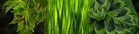 """Close-up of leaves by Panoramic Images - 48"""" x 12"""""""