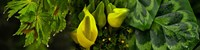 """Leaves and yellow flowers by Panoramic Images - 48"""" x 12"""", FulcrumGallery.com brand"""