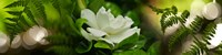 """Fern with magnolia by Panoramic Images - 48"""" x 12"""""""