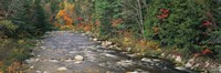 """River flowing through a forest, Ellis River, White Mountains, New Hampshire, USA by Panoramic Images - 36"""" x 12"""""""