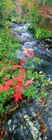 """River flowing through a forest, Black River, Upper Peninsula, Michigan (vertical) by Panoramic Images - 13"""" x 36"""""""