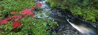 """River flowing through a forest, Black River, Upper Peninsula, Michigan (horizontal) by Panoramic Images - 36"""" x 12"""""""