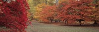 "Autumn trees in Westonbirt Arboretum, Gloucestershire, England by Panoramic Images - 36"" x 12"", FulcrumGallery.com brand"